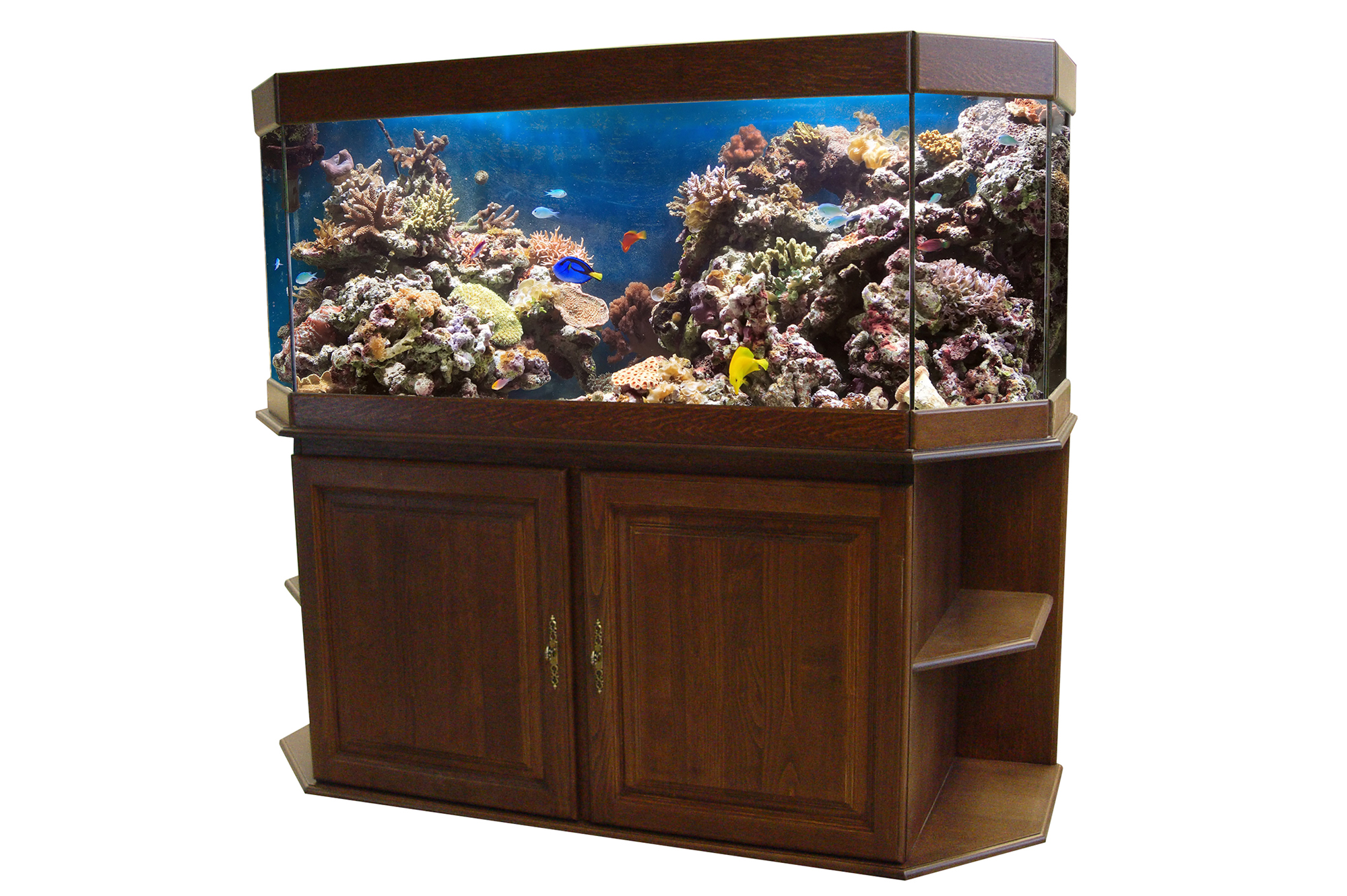 Aquariums et terrariums sur mesure 31 hp aquarium - Meuble aquarium sur mesure ...