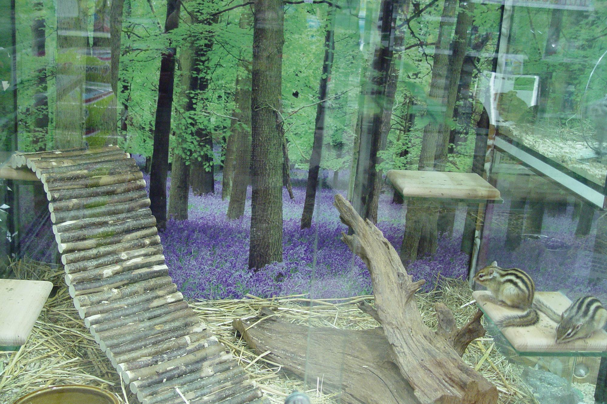 Habitats rongeurs