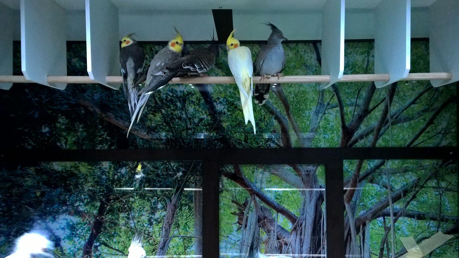Volière sur mesure pour l'animalerie Nilufar Garden à Ingwiller