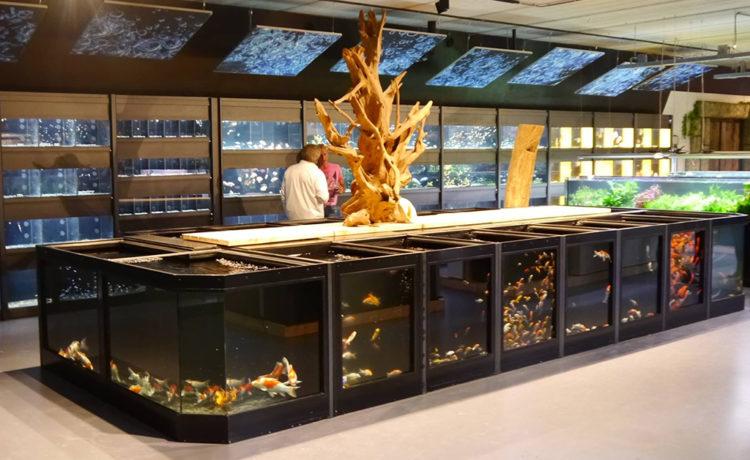 la plus grande animalerie des pays bas hp aquarium. Black Bedroom Furniture Sets. Home Design Ideas