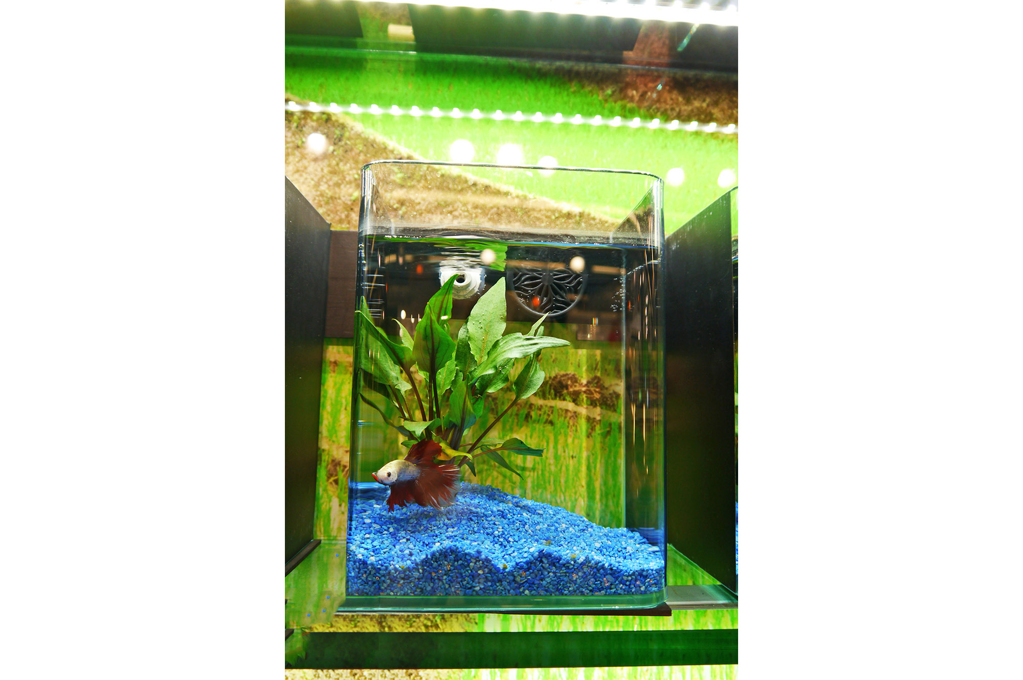Elements bettas&crevettes (3)