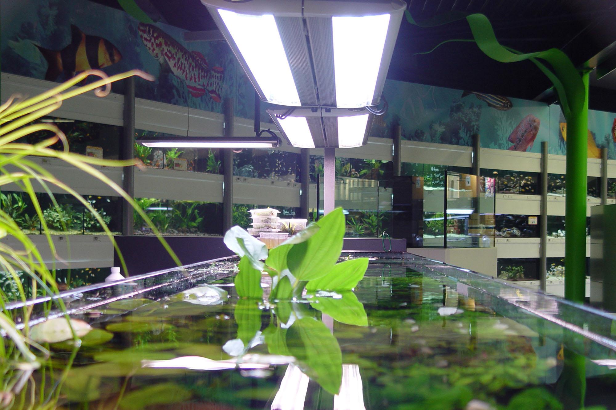 Bacs à plantes (3)